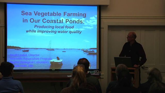 sea vegtable farming